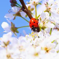 Frühling & Sommerzeit